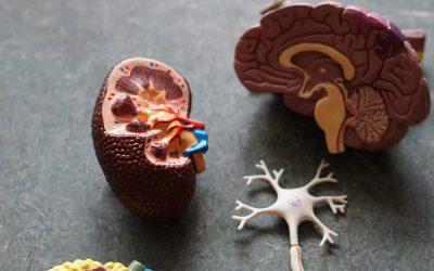 Nierenfunktionsdiagnostik – Cystatin C